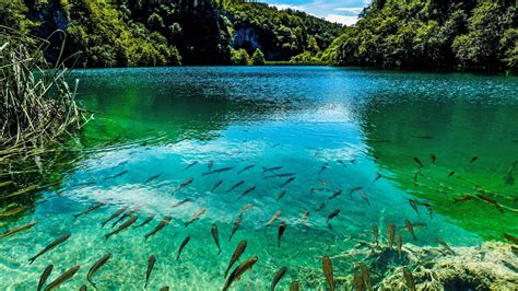Beautiful Turquoise Lake In Plitvice National Park