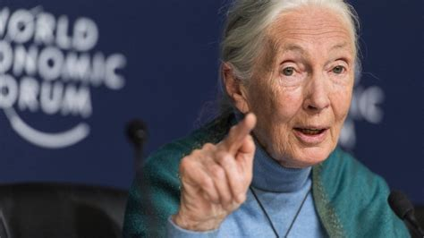 Jane Goodall's 'The Book of Hope' coming out in 2021 - ABC